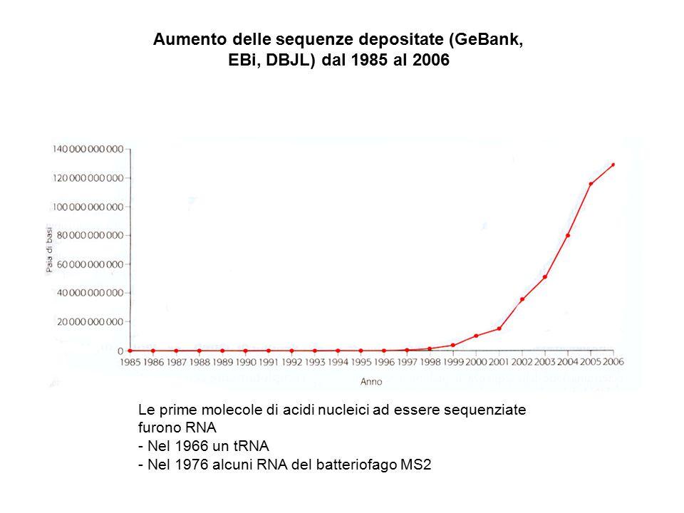 Aumento delle sequenze depositate (GeBank, EBi, DBJL) dal 1985 al 2006 Le prime molecole di acidi nucleici ad essere sequenziate furono RNA - Nel 1966