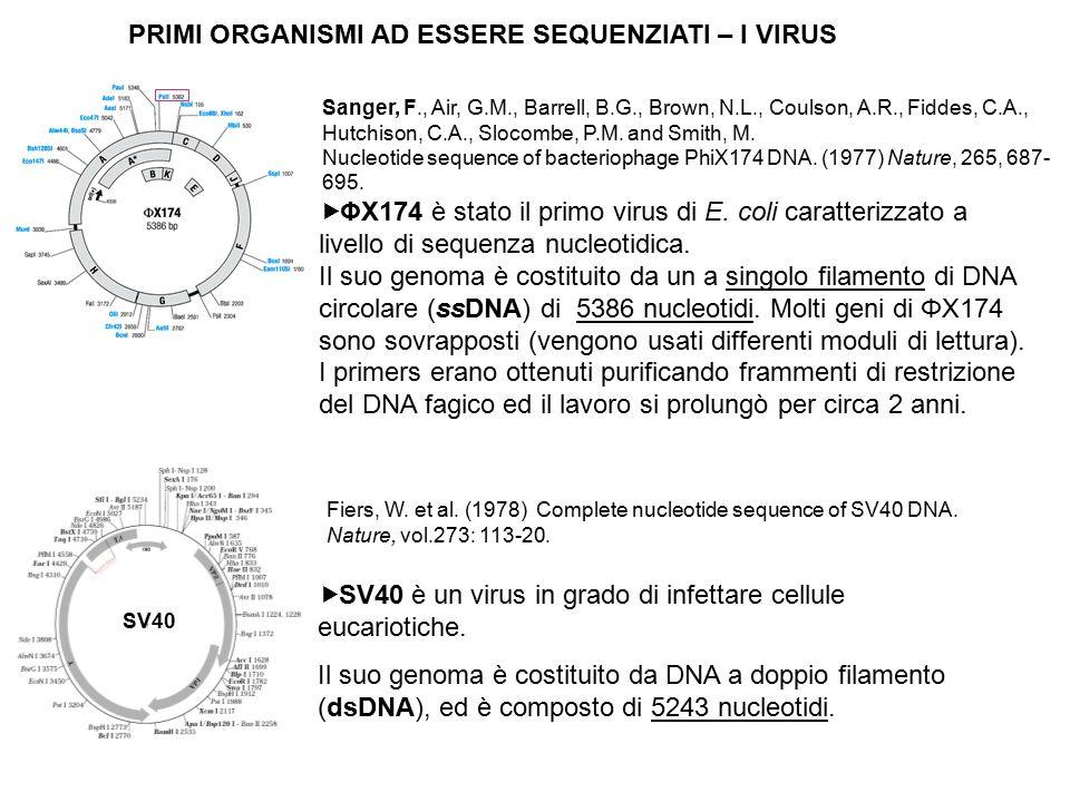  ΦX174 è stato il primo virus di E. coli caratterizzato a livello di sequenza nucleotidica. Il suo genoma è costituito da un a singolo filamento di D