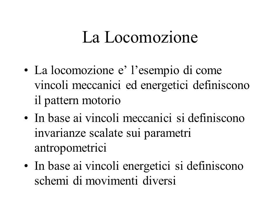 La Locomozione La locomozione e' l'esempio di come vincoli meccanici ed energetici definiscono il pattern motorio In base ai vincoli meccanici si definiscono invarianze scalate sui parametri antropometrici In base ai vincoli energetici si definiscono schemi di movimenti diversi