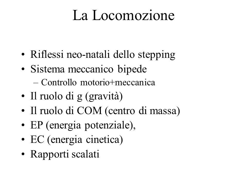 La Locomozione Riflessi neo-natali dello stepping Sistema meccanico bipede –Controllo motorio+meccanica Il ruolo di g (gravità) Il ruolo di COM (centro di massa) EP (energia potenziale), EC (energia cinetica) Rapporti scalati