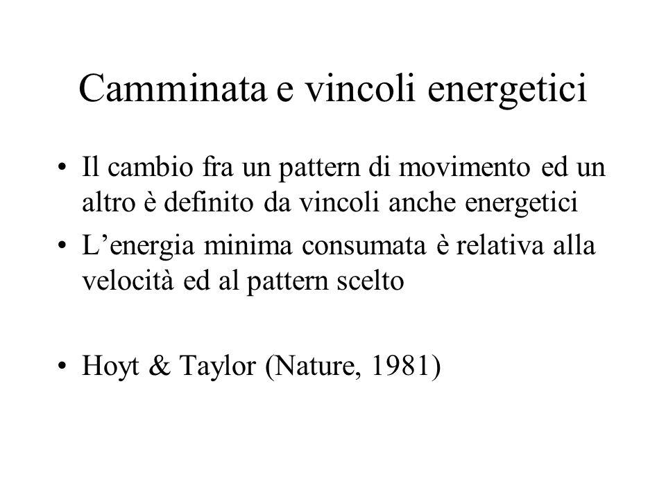Camminata e vincoli energetici Il cambio fra un pattern di movimento ed un altro è definito da vincoli anche energetici L'energia minima consumata è relativa alla velocità ed al pattern scelto Hoyt & Taylor (Nature, 1981)