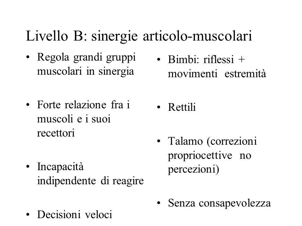 Livello B: sinergie articolo-muscolari Regola grandi gruppi muscolari in sinergia Forte relazione fra i muscoli e i suoi recettori Incapacità indipendente di reagire Decisioni veloci Bimbi: riflessi + movimenti estremità Rettili Talamo (correzioni propriocettive no percezioni) Senza consapevolezza