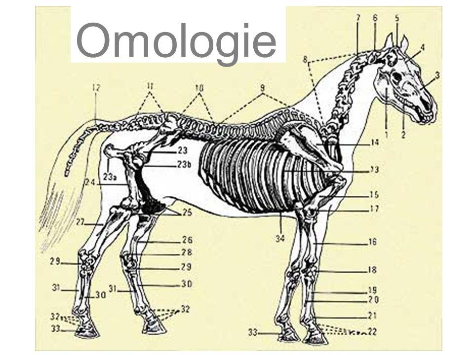 Omologie