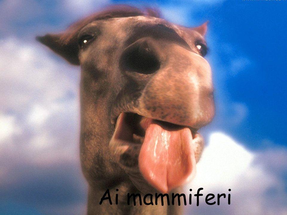Ai mammiferi