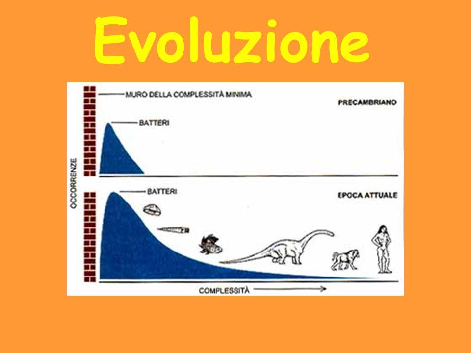 Secondo la teoria di Darwin, dai batteri