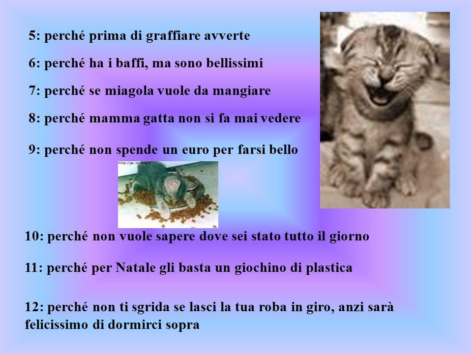 5: perché prima di graffiare avverte 6: perché ha i baffi, ma sono bellissimi 7: perché se miagola vuole da mangiare 8: perché mamma gatta non si fa m
