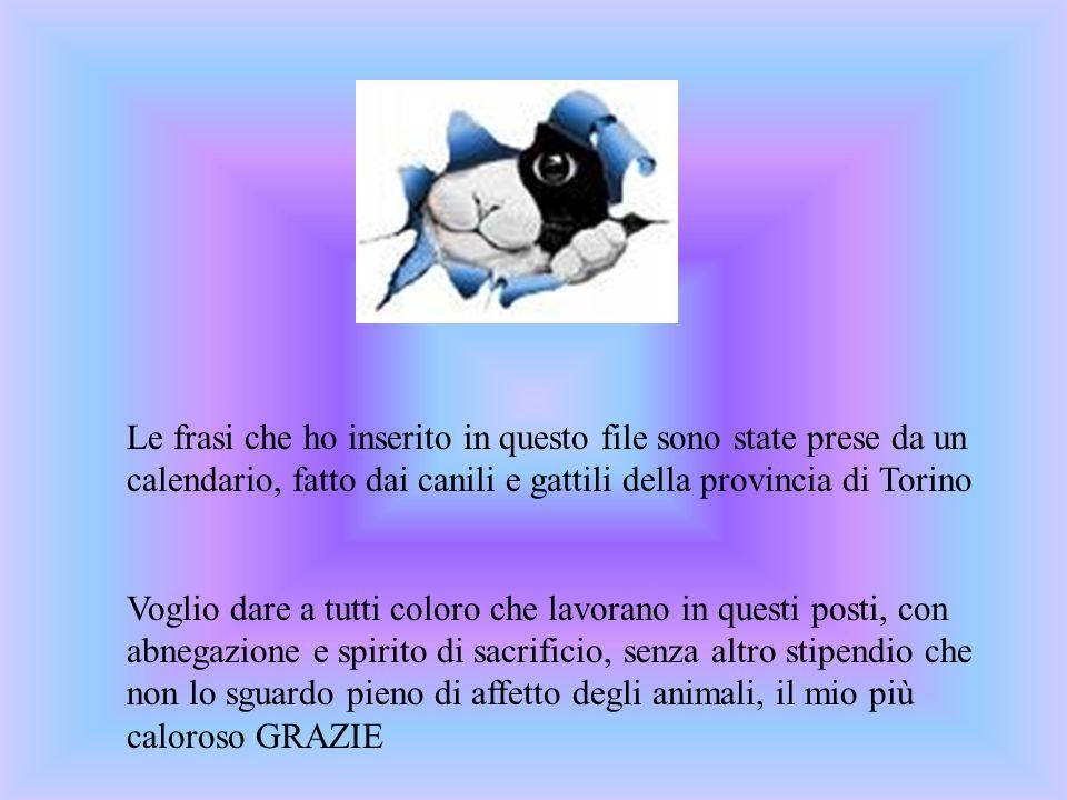 Le frasi che ho inserito in questo file sono state prese da un calendario, fatto dai canili e gattili della provincia di Torino Voglio dare a tutti co