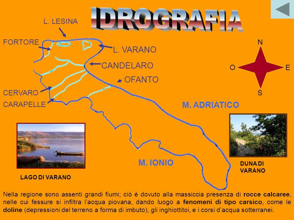 M. CALVO LE MURGE M. CORNACCHIA La Puglia forma una specie di stretto rettangolo che si allunga nel Mediterraneo per circa 350 chilometri. La larghezz