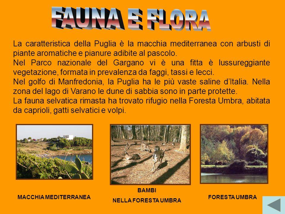 La Puglia è una delle regioni più calde e aride d'Italia.