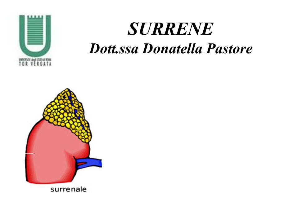 Il surrene è un organo pari, di forma piramidale (4-6g), situato sulla superficie antero-mediale del polo superiore di ciascun rene.