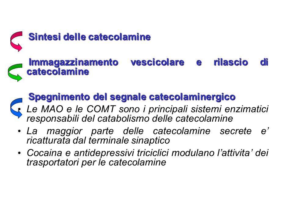 Sintesi delle catecolamine Sintesi delle catecolamine Immagazzinamento vescicolare e rilascio di catecolamine Immagazzinamento vescicolare e rilascio di catecolamine Spegnimento del segnale catecolaminergico Spegnimento del segnale catecolaminergico Le MAO e le COMT sono i principali sistemi enzimatici responsabili del catabolismo delle catecolamine Le MAO e le COMT sono i principali sistemi enzimatici responsabili del catabolismo delle catecolamine La maggior parte delle catecolamine secrete e' ricatturata dal terminale sinaptico La maggior parte delle catecolamine secrete e' ricatturata dal terminale sinaptico Cocaina e antidepressivi triciclici modulano l'attivita' dei trasportatori per le catecolamine Cocaina e antidepressivi triciclici modulano l'attivita' dei trasportatori per le catecolamine