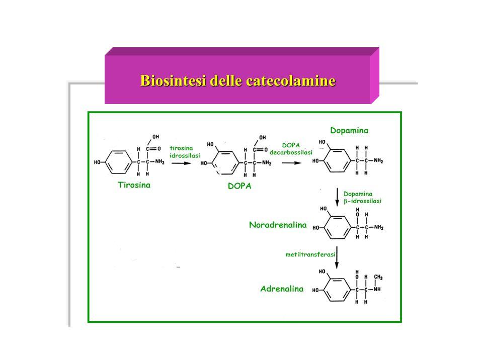 Biosintesi delle catecolamine