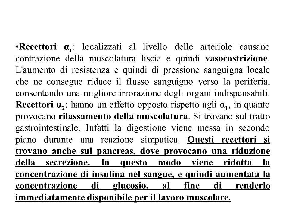 Recettori α 1 : localizzati al livello delle arteriole causano contrazione della muscolatura liscia e quindi vasocostrizione. L'aumento di resistenza