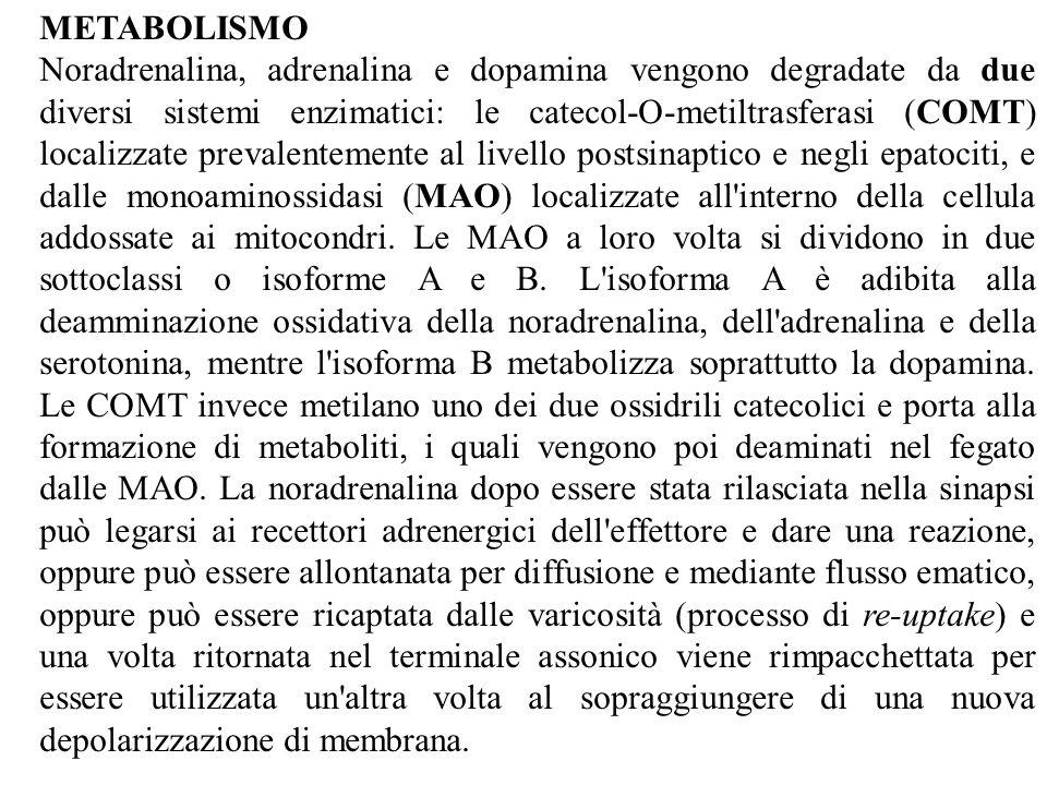 METABOLISMO Noradrenalina, adrenalina e dopamina vengono degradate da due diversi sistemi enzimatici: le catecol-O-metiltrasferasi (COMT) localizzate prevalentemente al livello postsinaptico e negli epatociti, e dalle monoaminossidasi (MAO) localizzate all interno della cellula addossate ai mitocondri.
