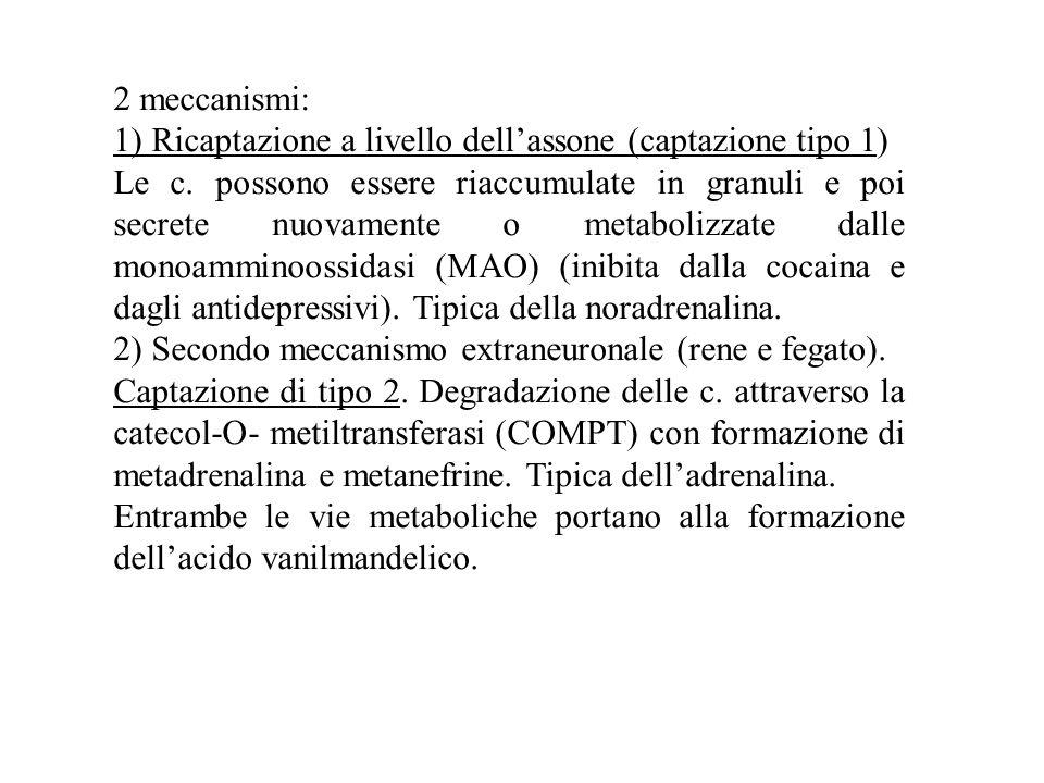 2 meccanismi: 1) Ricaptazione a livello dell'assone (captazione tipo 1) Le c.