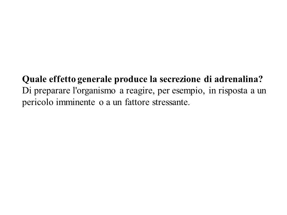 Quale effetto generale produce la secrezione di adrenalina? Di preparare l'organismo a reagire, per esempio, in risposta a un pericolo imminente o a u