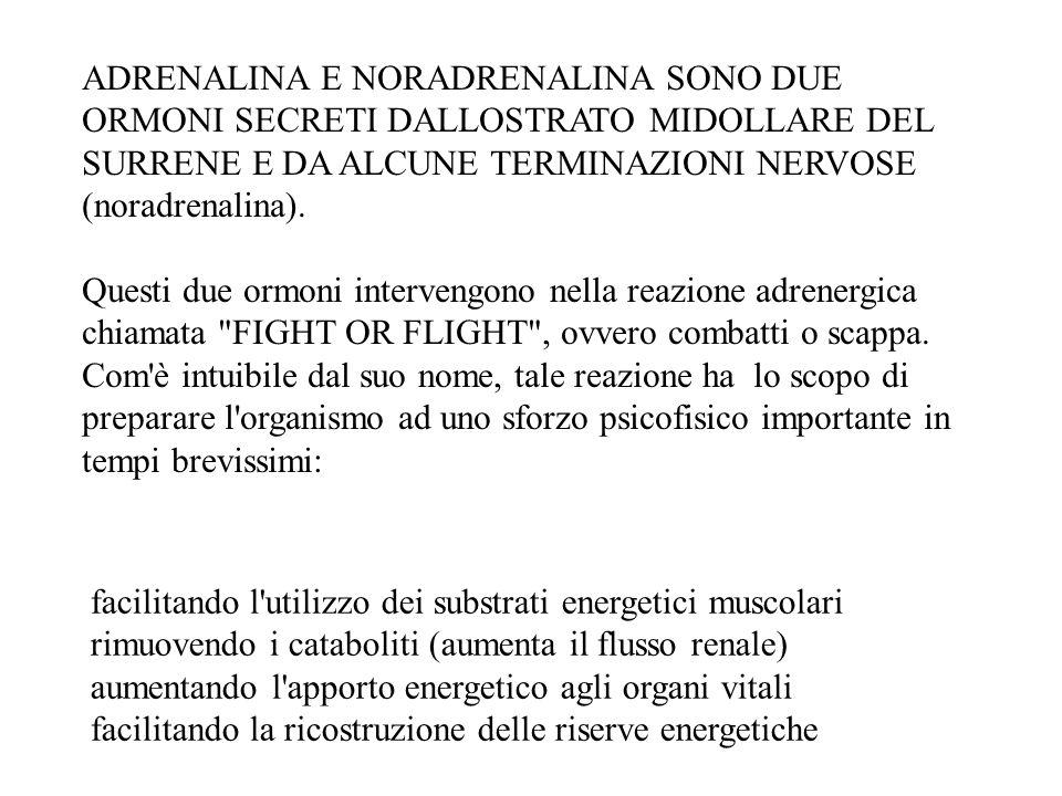 ADRENALINA E NORADRENALINA SONO DUE ORMONI SECRETI DALLOSTRATO MIDOLLARE DEL SURRENE E DA ALCUNE TERMINAZIONI NERVOSE (noradrenalina). Questi due ormo