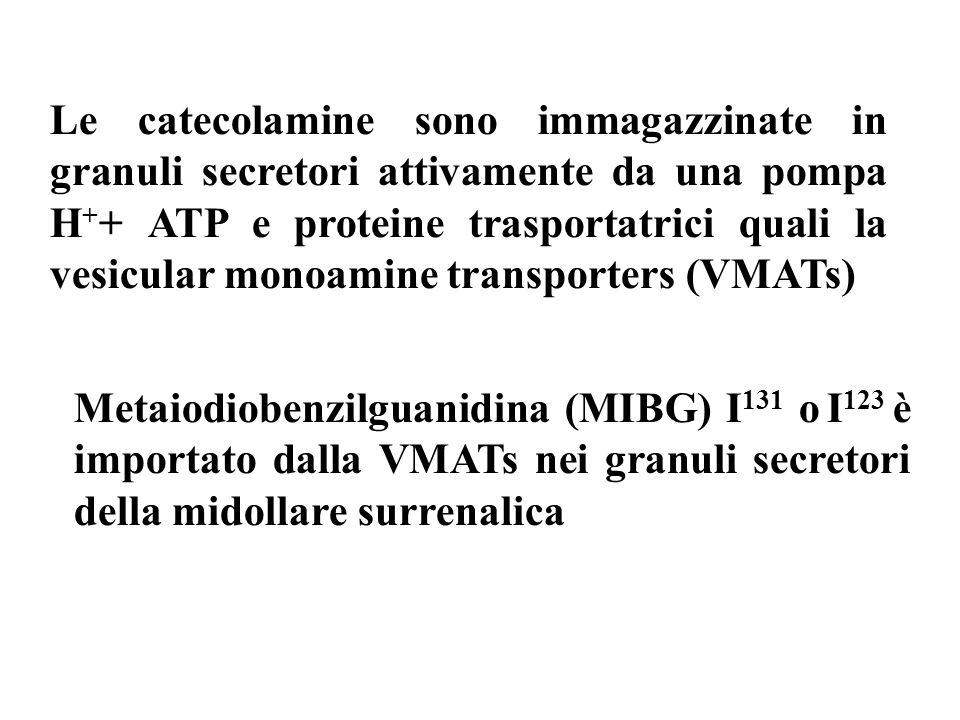 Le catecolamine sono immagazzinate in granuli secretori attivamente da una pompa H + + ATP e proteine trasportatrici quali la vesicular monoamine transporters (VMATs) Metaiodiobenzilguanidina (MIBG) I 131 o I 123 è importato dalla VMATs nei granuli secretori della midollare surrenalica