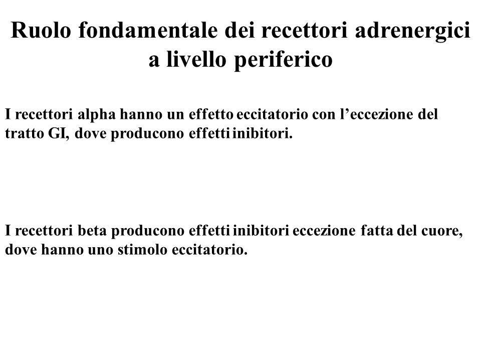 I recettori alpha hanno un effetto eccitatorio con l'eccezione del tratto GI, dove producono effetti inibitori. I recettori beta producono effetti ini