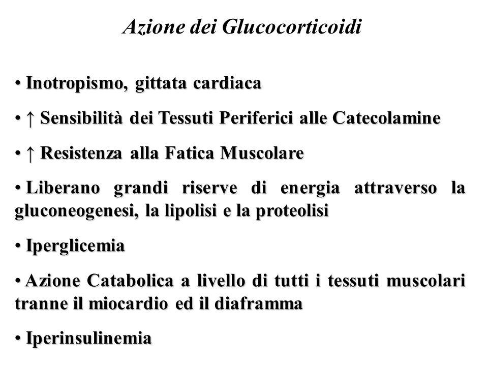 Azione dei Glucocorticoidi Inotropismo, gittata cardiaca Inotropismo, gittata cardiaca ↑ Sensibilità dei Tessuti Periferici alle Catecolamine ↑ Sensibilità dei Tessuti Periferici alle Catecolamine ↑ Resistenza alla Fatica Muscolare ↑ Resistenza alla Fatica Muscolare Liberano grandi riserve di energia attraverso la gluconeogenesi, la lipolisi e la proteolisi Liberano grandi riserve di energia attraverso la gluconeogenesi, la lipolisi e la proteolisi Iperglicemia Iperglicemia Azione Catabolica a livello di tutti i tessuti muscolari tranne il miocardio ed il diaframma Azione Catabolica a livello di tutti i tessuti muscolari tranne il miocardio ed il diaframma Iperinsulinemia Iperinsulinemia
