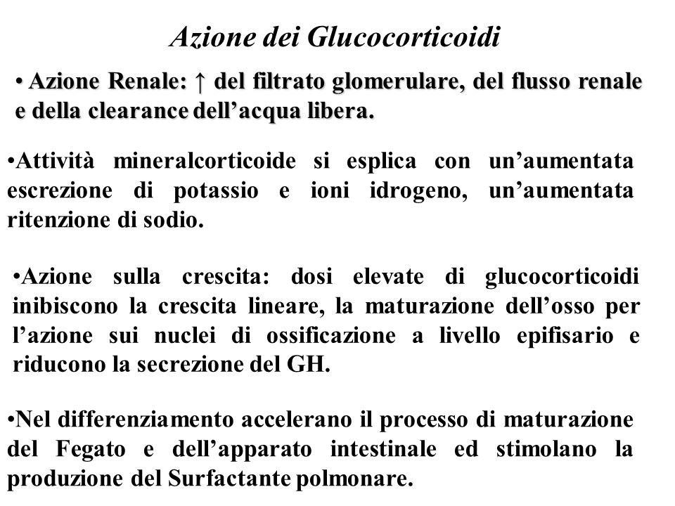 Azione dei Glucocorticoidi Azione Renale: ↑ del filtrato glomerulare, del flusso renale e della clearance dell'acqua libera. Azione Renale: ↑ del filt