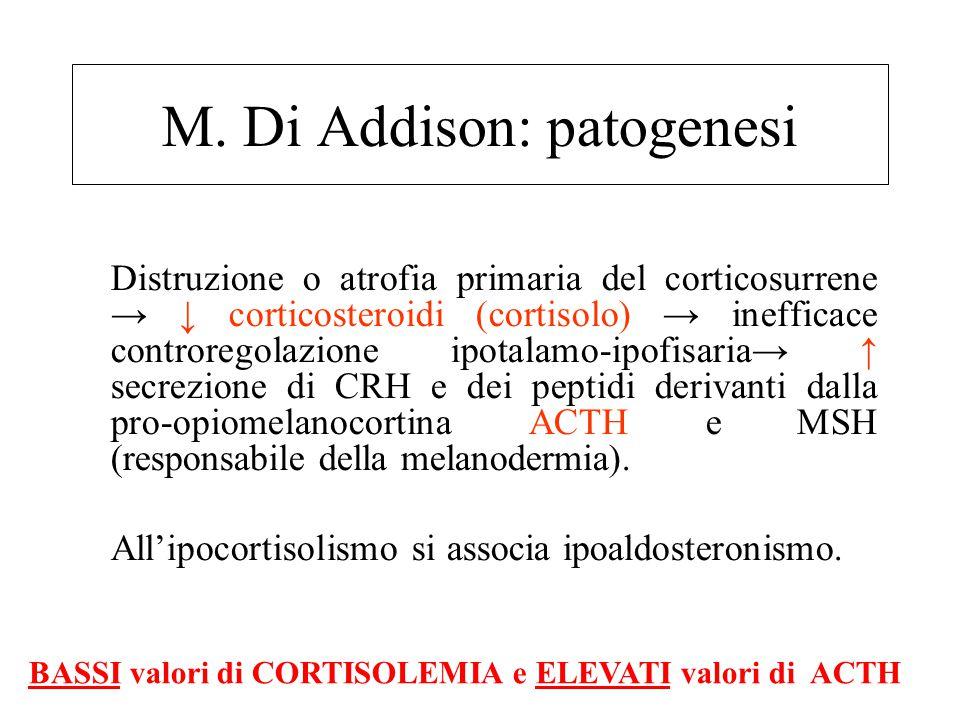 M. Di Addison: patogenesi Distruzione o atrofia primaria del corticosurrene → ↓ corticosteroidi (cortisolo) → inefficace controregolazione ipotalamo-i