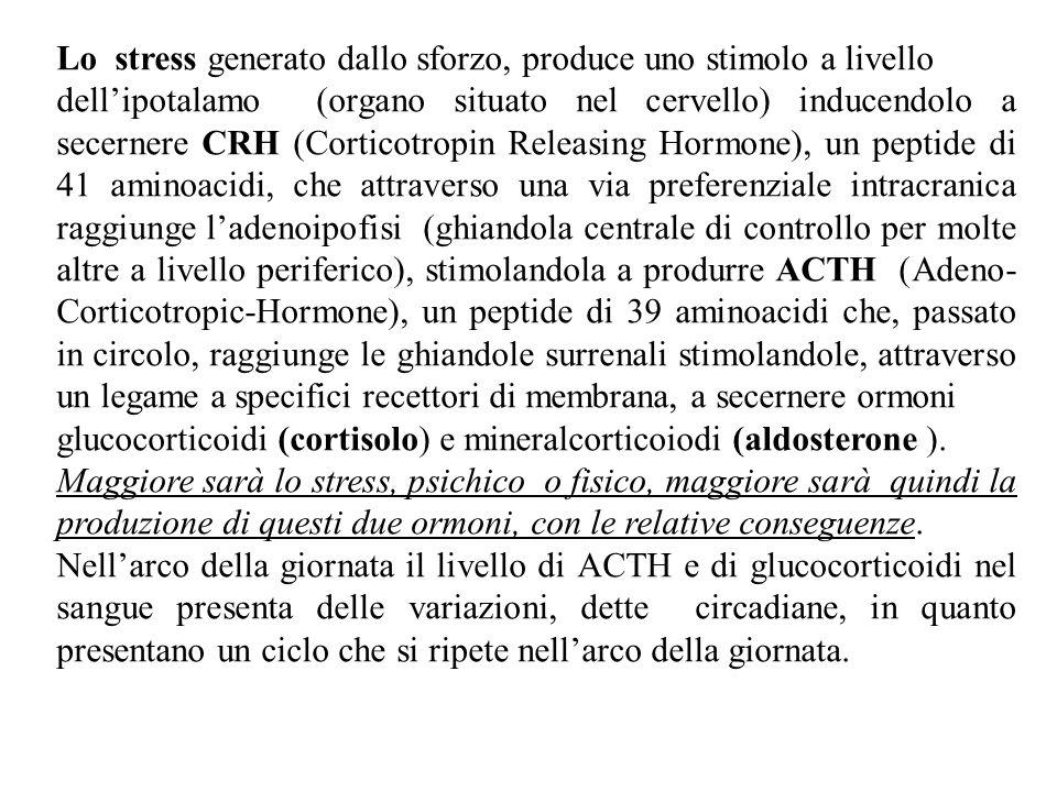 Lo stress generato dallo sforzo, produce uno stimolo a livello dell'ipotalamo (organo situato nel cervello) inducendolo a secernere CRH (Corticotropin Releasing Hormone), un peptide di 41 aminoacidi, che attraverso una via preferenziale intracranica raggiunge l'adenoipofisi (ghiandola centrale di controllo per molte altre a livello periferico), stimolandola a produrre ACTH (Adeno- Corticotropic-Hormone), un peptide di 39 aminoacidi che, passato in circolo, raggiunge le ghiandole surrenali stimolandole, attraverso un legame a specifici recettori di membrana, a secernere ormoni glucocorticoidi (cortisolo) e mineralcorticoiodi (aldosterone ).
