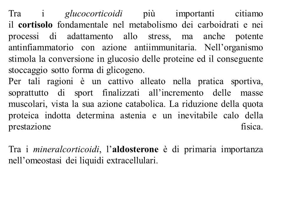 SURRENE CORTICALE (più esterna) Secerne corticosteroidi MIDOLLARE (più interna) Secerne catecolamine Zona glomerulare (più esterna) (mineralcorticoidi) Regolate dall'ACTH Zona fascicolata (glucocorticoidi) Zona reticolare (androgeni) Regolata dal sistema renina-Angiotensina