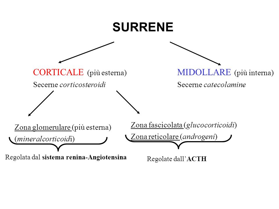SURRENE CORTICALE (più esterna) Secerne corticosteroidi MIDOLLARE (più interna) Secerne catecolamine Zona glomerulare (più esterna) (mineralcorticoidi