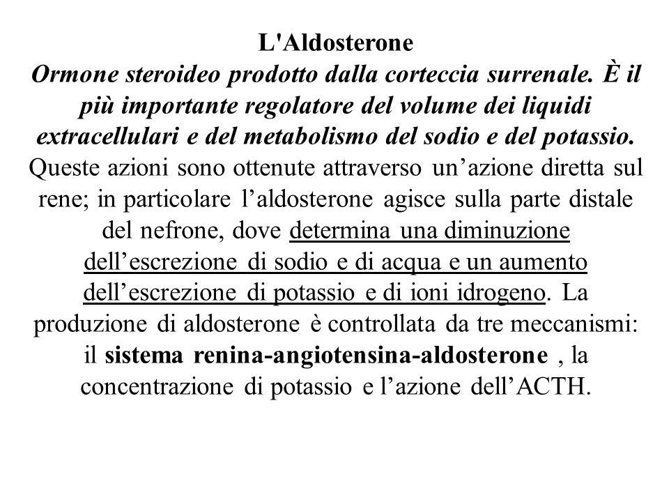 L'Aldosterone Ormone steroideo prodotto dalla corteccia surrenale. È il più importante regolatore del volume dei liquidi extracellulari e del metaboli