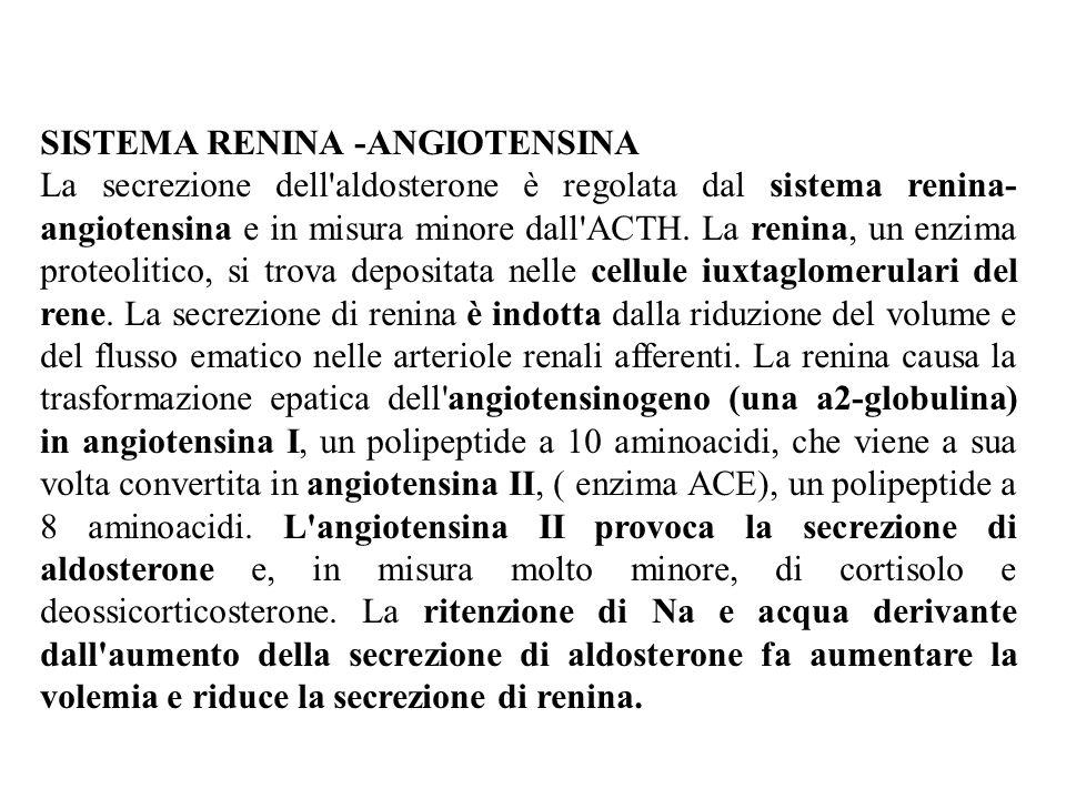 SISTEMA RENINA -ANGIOTENSINA La secrezione dell aldosterone è regolata dal sistema renina- angiotensina e in misura minore dall ACTH.