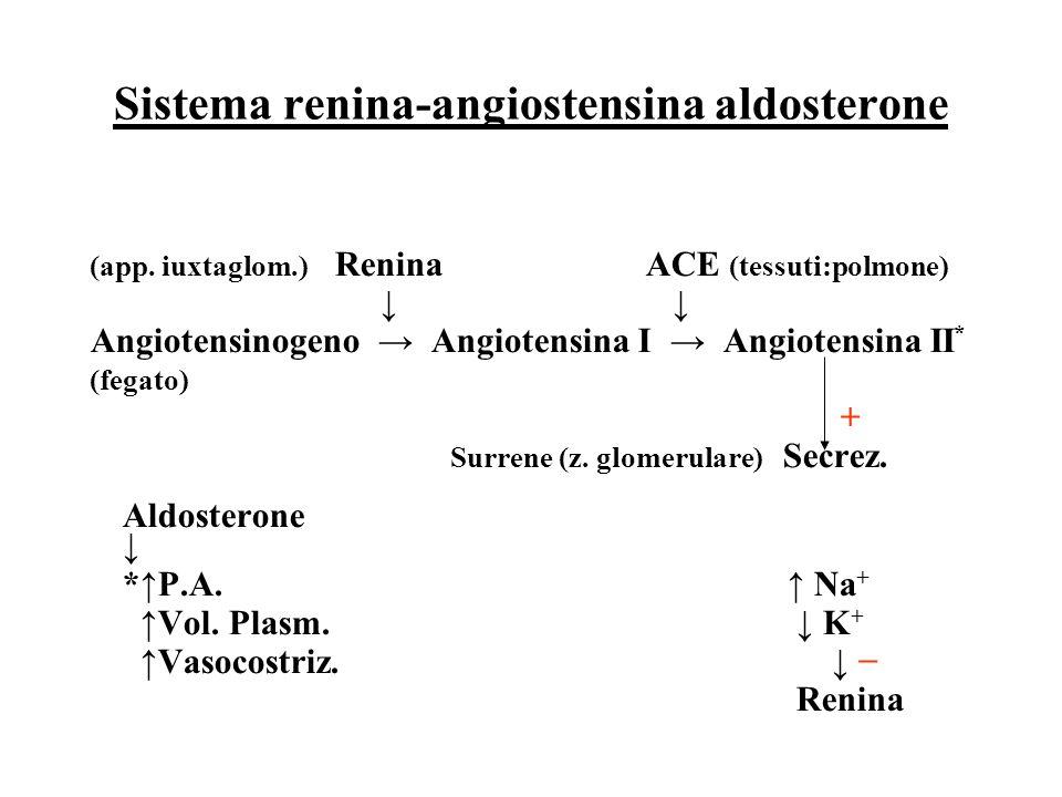 Sistema renina-angiostensina aldosterone (app. iuxtaglom.) Renina ACE (tessuti:polmone) ↓ ↓ Angiotensinogeno → Angiotensina I → Angiotensina II * (fe