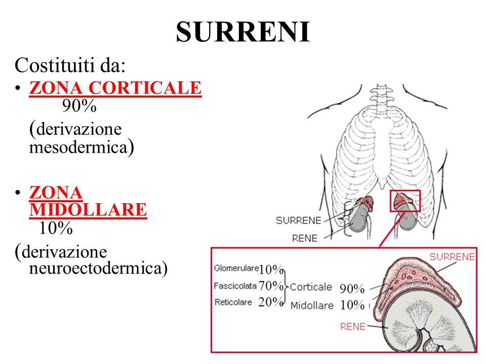 Compartimenti funzionali della corteccia surrenale ZONA glomerulare fascicolata reticolare PRINCIPALE ORMONE SECRETO aldosterone cortisolo DHEA FATTORI DI sistema renina- ACTH ACTH CONTROLLO angiotensina DHEA : (deidroepiandrosterone) ACTH :corticotropina