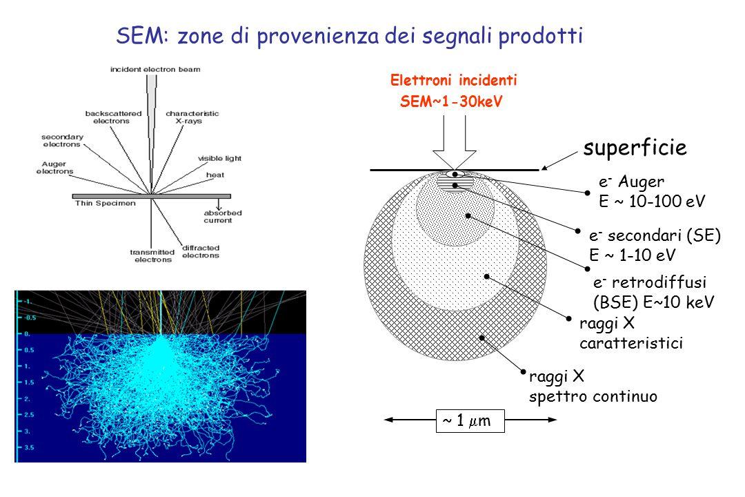 SEM: zone di provenienza dei segnali prodotti ~ 1  m e - Auger E ~ 10-100 eV e - secondari (SE) E ~ 1-10 eV e - retrodiffusi (BSE) E~10 keV raggi X c