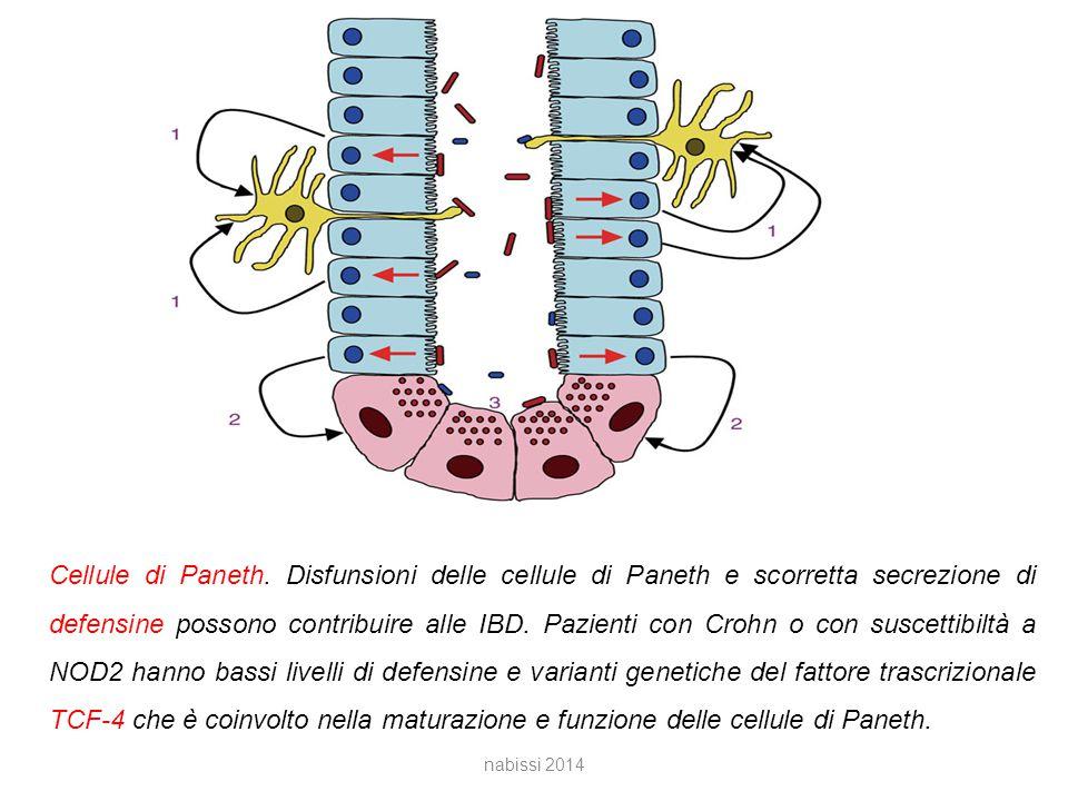 Cellule di Paneth.