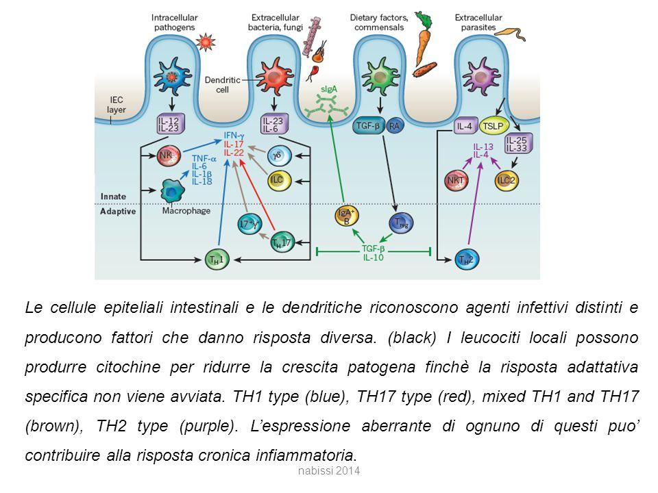 Le cellule epiteliali intestinali e le dendritiche riconoscono agenti infettivi distinti e producono fattori che danno risposta diversa.