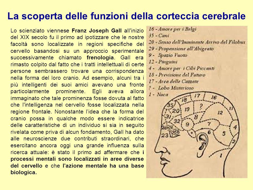 La scoperta delle funzioni della corteccia cerebrale Lo scienziato viennese Franz Joseph Gall all'inizio del XIX secolo fu il primo ad ipotizzare che