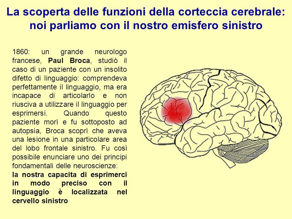 La scoperta delle funzioni della corteccia cerebrale: noi parliamo con il nostro emisfero sinistro 1860: un grande neurologo francese, Paul Broca, stu