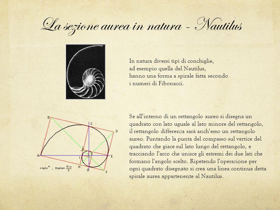 La sezione aurea in natura - Nautilus In natura diversi tipi di conchiglie, ad esempio quella del Nautilus, hanno una forma a spirale fatta secondo i numeri di Fibonacci.