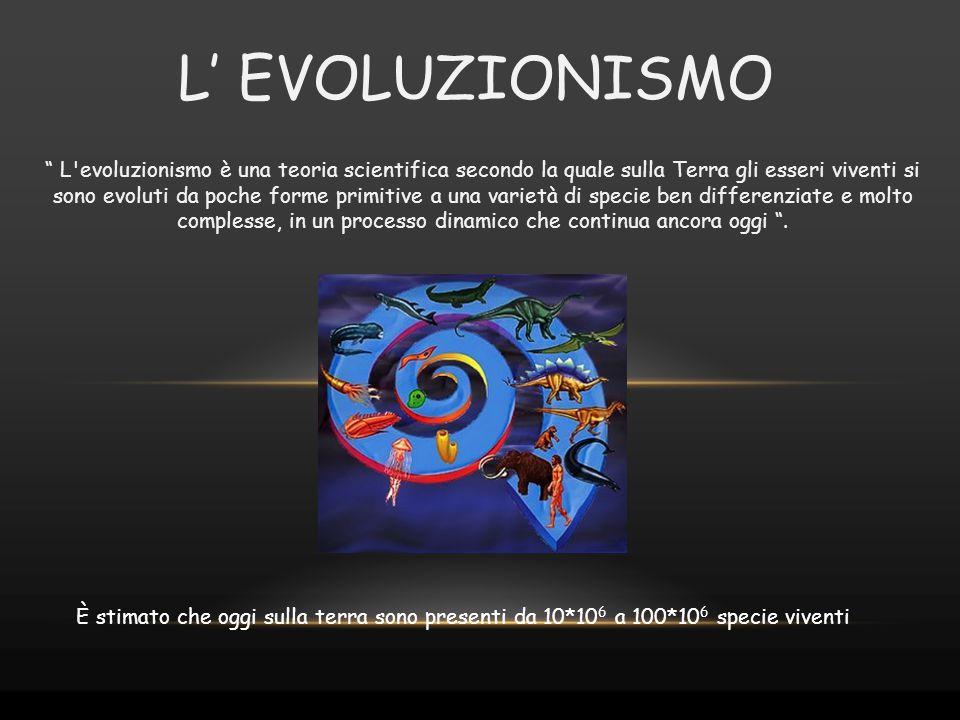 """"""" L'evoluzionismo è una teoria scientifica secondo la quale sulla Terra gli esseri viventi si sono evoluti da poche forme primitive a una varietà di s"""