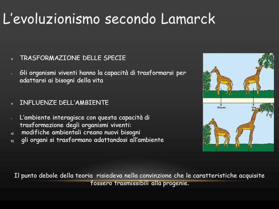 L'evoluzionismo secondo Lamarck  TRASFORMAZIONE DELLE SPECIE Gli organismi viventi hanno la capacità di trasformarsi per adattarsi ai bisogni della v