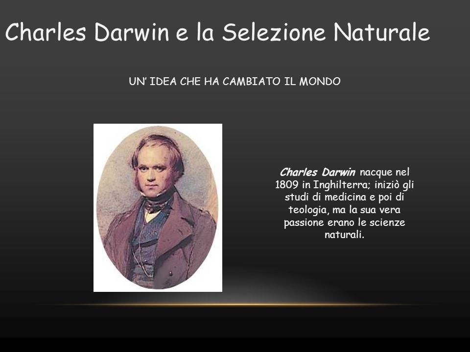 Charles Darwin e la Selezione Naturale UN' IDEA CHE HA CAMBIATO IL MONDO Charles Darwin nacque nel 1809 in Inghilterra; iniziò gli studi di medicina e