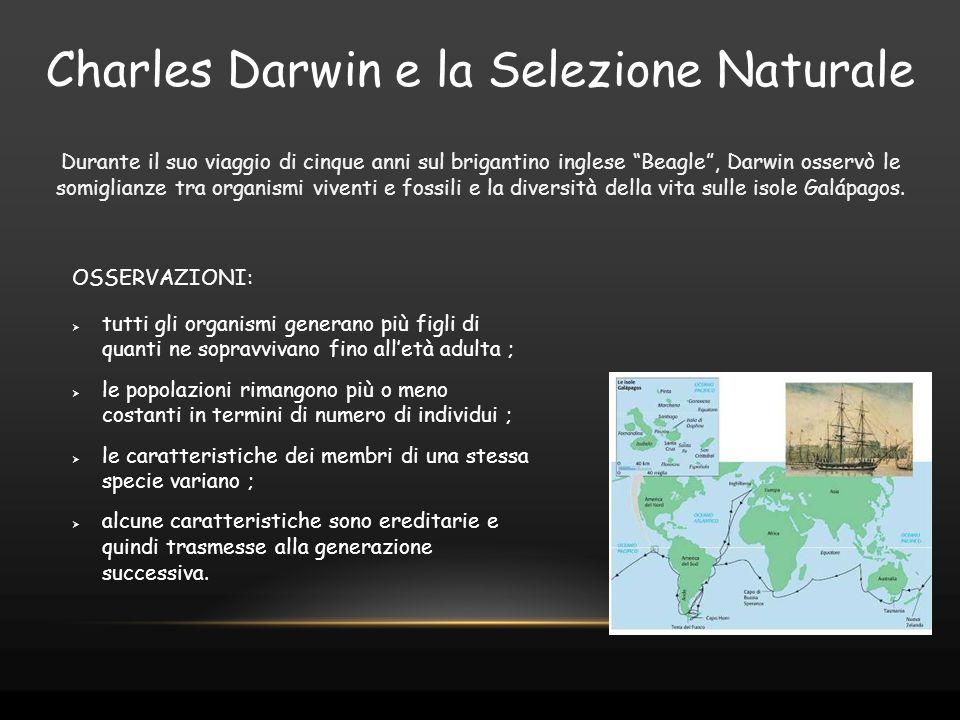 """Durante il suo viaggio di cinque anni sul brigantino inglese """"Beagle"""", Darwin osservò le somiglianze tra organismi viventi e fossili e la diversità de"""