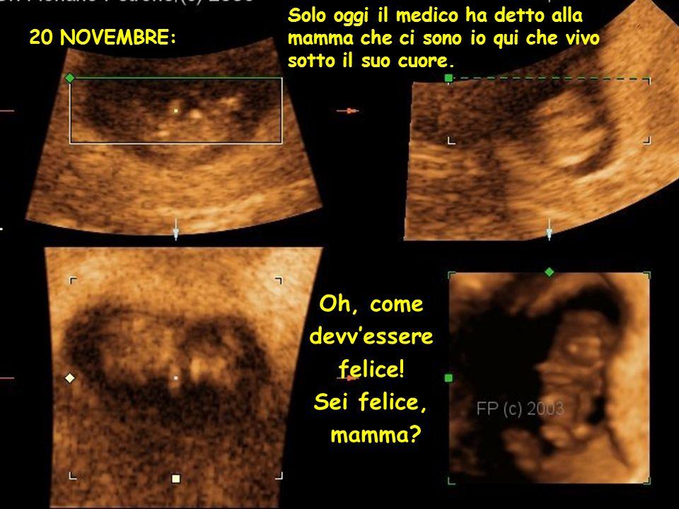 20 NOVEMBRE: Solo oggi il medico ha detto alla mamma che ci sono io qui che vivo sotto il suo cuore.