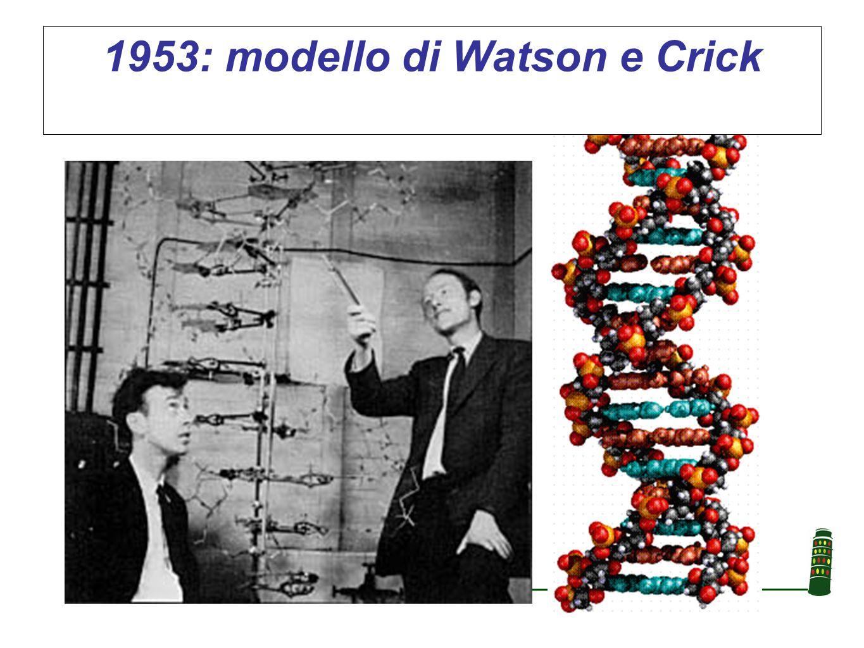 1953: modello di Watson e Crick