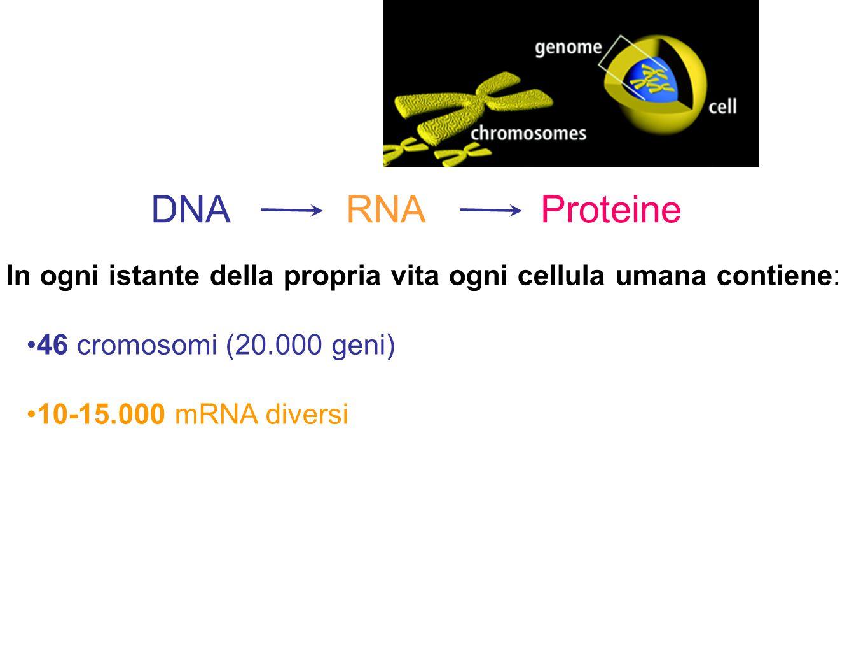 In ogni istante della propria vita ogni cellula umana contiene: 46 cromosomi (20.000 geni) 10-15.000 mRNA diversi DNA RNA Proteine