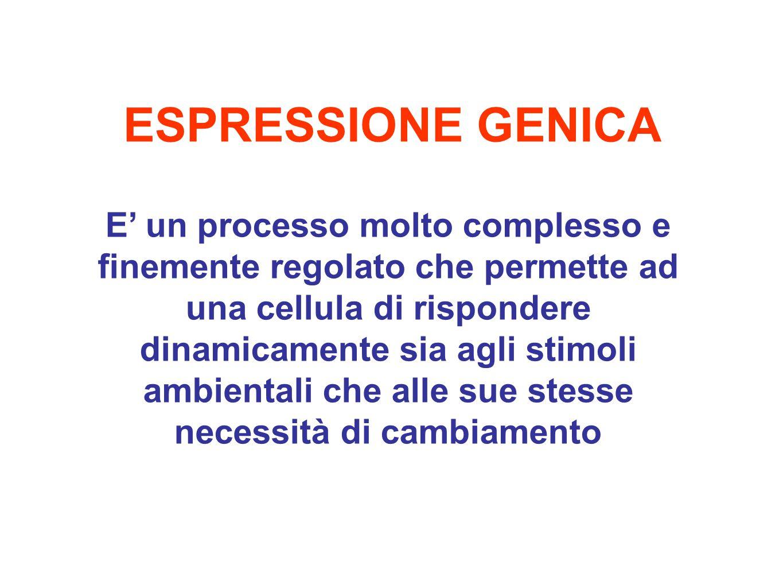 ESPRESSIONE GENICA E' un processo molto complesso e finemente regolato che permette ad una cellula di rispondere dinamicamente sia agli stimoli ambientali che alle sue stesse necessità di cambiamento