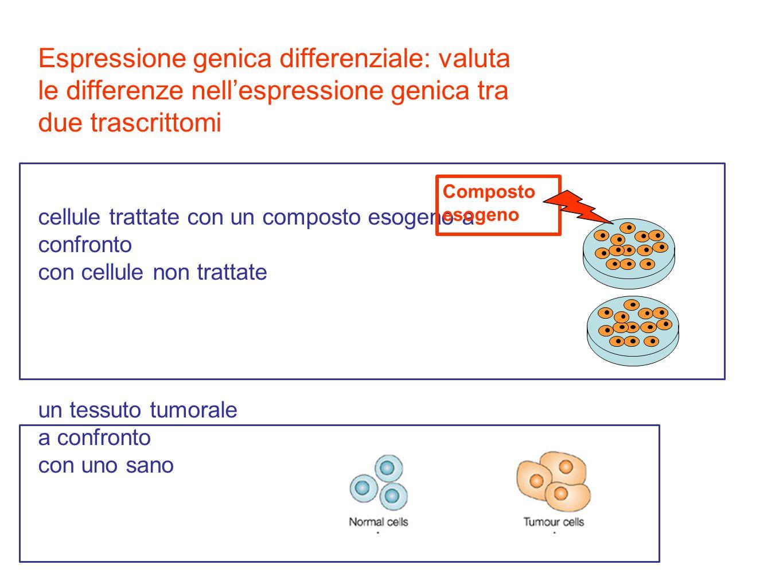 Espressione genica differenziale: valuta le differenze nell'espressione genica tra due trascrittomi cellule trattate con un composto esogeno a confronto con cellule non trattate un tessuto tumorale a confronto con uno sano Composto esogeno