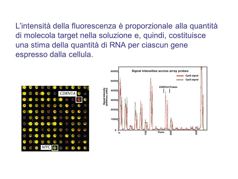 L'intensità della fluorescenza è proporzionale alla quantità di molecola target nella soluzione e, quindi, costituisce una stima della quantità di RNA per ciascun gene espresso dalla cellula.
