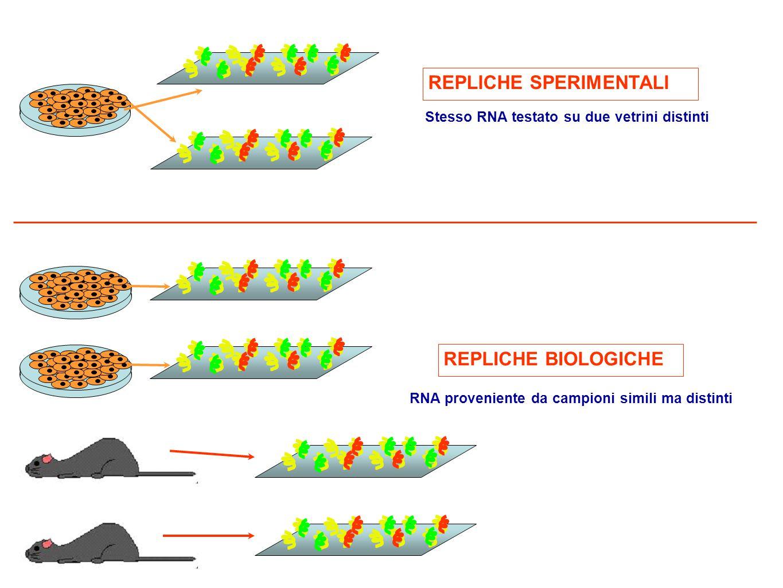 REPLICHE SPERIMENTALI REPLICHE BIOLOGICHE Stesso RNA testato su due vetrini distinti RNA proveniente da campioni simili ma distinti